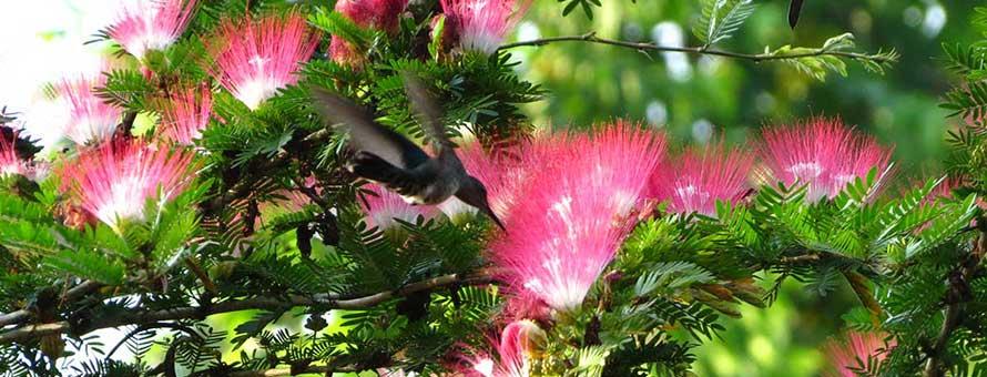Bungalows Ache plants next to Cahuita National Park